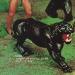 tarzan-jungle-cat